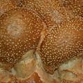 Challah Bread by Eliyahu Shear