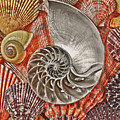 Chambered Nautilus Shell Abstract by Garry Gay