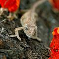 Chameleon by Dirk Brink