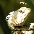 Chameleon Up-close 1 by Gallery Hermana