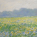 Champ D'iris A Giverny by Claude Monet