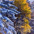Change Of Seasons by Rusty Ruckel
