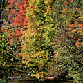 Changing Colours Of The Fall by Maria Keady