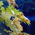 Changing Seasons by Kathleen Sartoris
