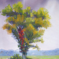 Changing Weather Changing Tree by Christine Camp