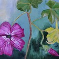 Channel Islands' Island Mallow by Stacey Best