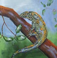 Channel Islands Night Lizard by Stacey Best