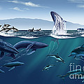 Channel Islands Whales by Jim Dowdalls