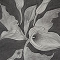 Charcoal by Gabriela  Bacter