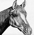 Charcoal Horse by Jay Johnston