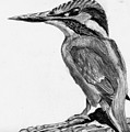 Charcoal Kingfisher by Jay Johnston