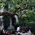 Charleston Buggy Ride by Skip Willits