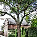 Charleston Church Street Live Oak And Ivy by Anthony Ackerman