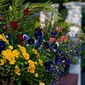 Charleston Flower Boxes by Melissa Wyatt