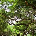 Charleston Oaks 8 by Alan Hausenflock