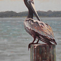 Charleston Pelican by Todd Baxter