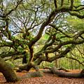 Charleston Sc Angel Oak Tree South Carolina Landscape by Dave Allen
