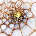 Charlotte's Web by Amanda Moore
