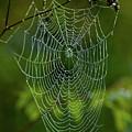 Charlotte's Web by Paul Mangold