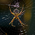 Charlotte's Web by Thanh Thuy Nguyen