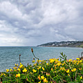 Charmouth Overlook by Susie Peek
