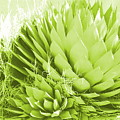 Chartreuse Agave by Colleen Cornelius