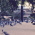 Chasing Pigeons by Rasma Bertz