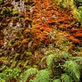 Chasm Creek Cutting by Robert Green