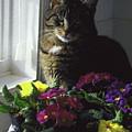 Chat Et Fleurs by Totel Pro