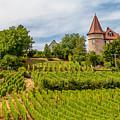 Chateau In A Vineyard by W Chris Fooshee
