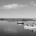 Chatham Harbor by Cathy Fitzgerald