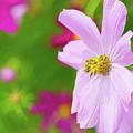 Cheerful Cosmos by Garvin Hunter