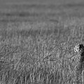 Cheetah by Andy Bitterer