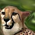 Cheetah by Crystal Webb