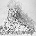 Cheetah by George Desire Herman