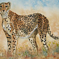 Cheetah by Gina Hall