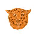 Cheetah Head Drawing by Aloysius Patrimonio