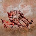 Cheetah Hunting by Gull G