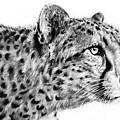 Cheetah  by Lachri