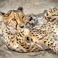 Cheetah Lounge Cats by LeeAnn McLaneGoetz McLaneGoetzStudioLLCcom