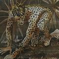 Cheetah by Robert D McBain
