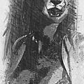 Cheetah by Robert Hill