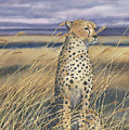 Cheetah by Sharon Farber
