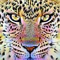 Cheetah Vi by Wbk