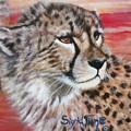 Blaa Kattproduksjoner       Cheetahs Face by Sigrid Tune