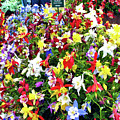 Chelsea Flower Show by Don Siebel