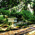 Cherie's Garden by Jim Turri