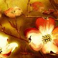 Cherokee Rose Dogwood - Glow by Jan Dappen