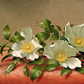 Cherokee Roses by Martin Johnson Heade