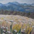 Cherokee Wildflowers by Cathy Weaver